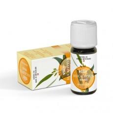 Эфирное масло Эвкалипт/Eukalyptus citriodora